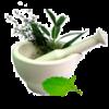 India-Herbs